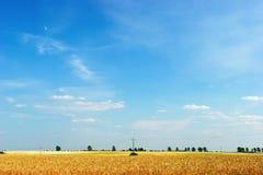 Blauwe hemel over graangewassengebied Stock Foto's