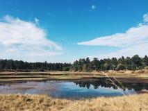 Blauwe hemel over moerasland Royalty-vrije Stock Fotografie