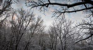 Blauwe hemel over sneeuw behandeld bos Stock Afbeelding