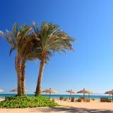 Blauwe hemel, palm en paraplu's Stock Fotografie