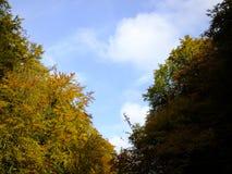Blauwe hemel tussen de bomen Stock Foto's
