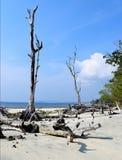 Blauwe Hemel, Wit Zand, Oceaan, en de Gevallen Naakte Overzeese Bomen van Mohua - Olifantsstrand, Havelock-Eiland, van Andaman &  royalty-vrije stock foto