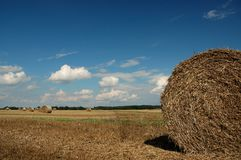 Blauwe hemel, witte wolken en het gele graan Royalty-vrije Stock Afbeeldingen