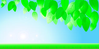 Blauwe hemel, zon en tak met bladeren Royalty-vrije Stock Afbeelding