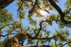 Blauwe hemel, zon en wolken door takken, bomen, bladeren en bloemen Stock Afbeelding