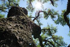 Blauwe hemel, zon en wolken door takken, bomen, bladeren en bloemen Royalty-vrije Stock Foto