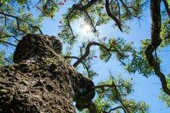 Blauwe hemel, zon en wolken door takken, bomen, bladeren en bloemen Stock Afbeeldingen