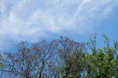 Blauwe hemel, zon en wolken door takken, bomen, bladeren en bloemen Stock Foto's
