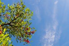 Blauwe hemel, zon en wolken door takken, bomen, bladeren en bloemen Stock Fotografie