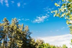 Blauwe hemel, zon en wolken door takken, bomen, bladeren en bloemen Royalty-vrije Stock Foto's