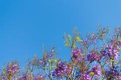 Blauwe hemel, zon en wolken door takken, bomen, bladeren en bloemen Royalty-vrije Stock Fotografie