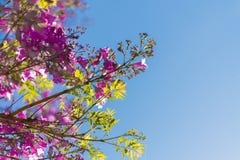 Blauwe hemel, zon en wolken door takken, bomen, bladeren en bloemen Stock Foto