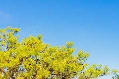Blauwe hemel, zon en wolken door takken, bomen, bladeren en bloemen Royalty-vrije Stock Afbeelding