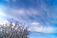 Blauwe hemelachtergrond met uiterst kleine wolken Royalty-vrije Stock Foto's