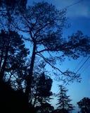 Blauwe hemelbomen stock afbeelding