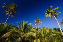 Blauwe hemelpalmen Stock Foto's