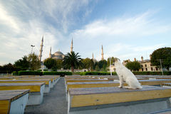 Blauwe het verstandhond van de Moskee in voorzijde, Istanboel, Turkije royalty-vrije stock afbeelding