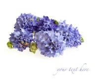 Blauwe hyacinten Stock Foto