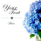 Blauwe Hydrangea hortensia's met de Ruimte van het Exemplaar Royalty-vrije Stock Afbeeldingen