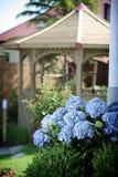 Blauwe hydrangea hortensia's in tuin Royalty-vrije Stock Afbeeldingen