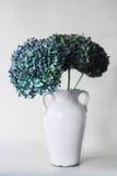 Blauwe hydrangea hortensiabloemen op een grijze achtergrond Stock Foto's