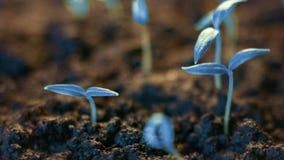 Blauwe installaties die, futuristische planeet, nieuwe het levensgerminatie, de groei modern concept groeien stock video