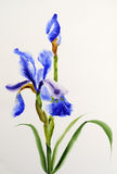 Blauwe iris stock illustratie