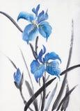 Blauwe iris drie vector illustratie
