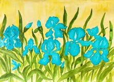 Blauwe irissen Royalty-vrije Stock Afbeelding