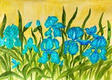 Blauwe irissen Stock Foto