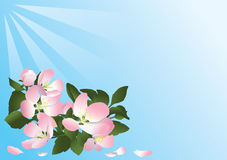 Blauwe kaart met bloemen van appelboom Royalty-vrije Stock Foto