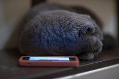 Blauwe kat dichtbij de telefoon Stock Afbeelding