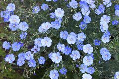 Blauwe kleur stock fotografie