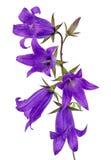 Blauwe Klok Royalty-vrije Stock Fotografie