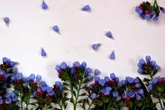 Blauwe klokbloemen Royalty-vrije Stock Afbeeldingen