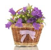 Blauwe klokbloemen in mand Royalty-vrije Stock Afbeelding