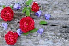 Blauwe klokjepersicifolia en rood nam bloemen op houten achtergrond toe Het klokje is een bloeiende installatie Vlak leg, bovenka Royalty-vrije Stock Foto's