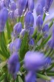 Blauwe knoppen stock afbeelding