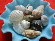 Blauwe kom met shells Stock Fotografie