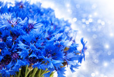 Blauwe korenbloemen Stock Foto