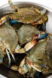 Blauwe Krab Stock Foto's