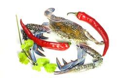 Blauwe krab en hete Spaanse pepers stock fotografie