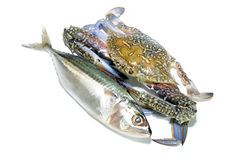 Blauwe krab en makreel Stock Foto's