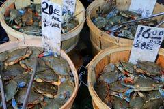 Blauwe Krabben Stock Foto