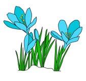 Blauwe krokusbloemen royalty-vrije stock foto