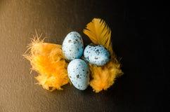 Blauwe kwartelseieren op een zwarte achtergrond en gele veren royalty-vrije stock foto