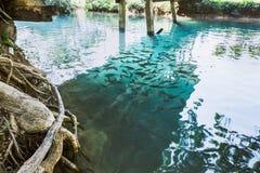 Blauwe Lagune in Vang Vieng royalty-vrije stock foto