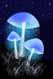 Blauwe Lichtgevende paddestoelen in de nacht met gras royalty-vrije illustratie