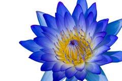 Blauwe lotusbloem Stock Afbeeldingen
