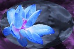 Blauwe lotusbloem in kristallen bol royalty-vrije stock afbeeldingen
